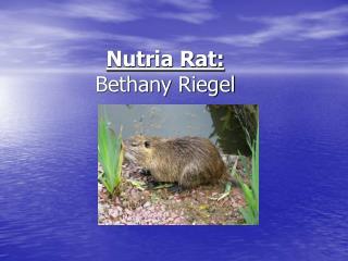Nutria Rat: Bethany Riegel