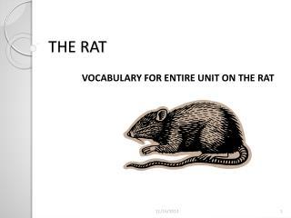 THE RAT