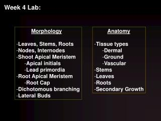 Morphology Leaves, Stems, Roots Nodes, Internodes Shoot Apical Meristem Apical initials