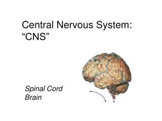 """Central Nervous System: """"CNS"""""""