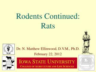 Rodents Continued: Rats