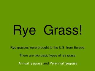 Rye  Grass!
