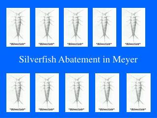 Silverfish Abatement in Meyer