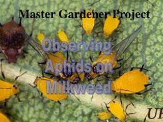 Master Gardener Project