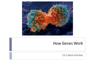 How Genes Work