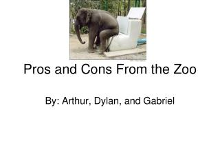 Pros and Cons From the Zoo