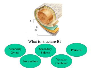 What is structure B?