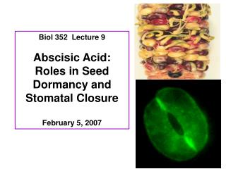 Biol 352  Lecture 9 Abscisic Acid: Roles in Seed Dormancy and Stomatal Closure February 5, 2007