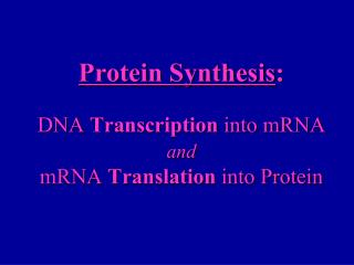 Protein Synthesis : DNA  Transcription  into mRNA  and mRNA  Translation  into Protein