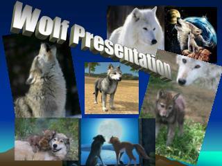 Wolf Presentation