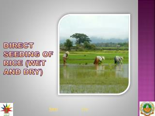 DIRECT SEEDING OF RICE WET AND DRY