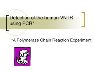Detection of the human VNTR using PCR*