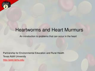 Heartworms and Heart Murmurs