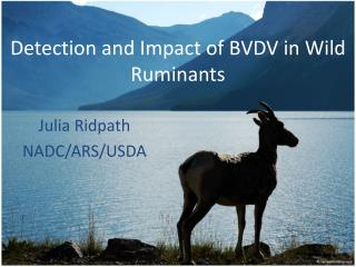 Detection and Impact of BVDV in Wild Ruminants