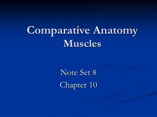 Comparative Anatomy Muscles