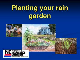 Planting your rain garden