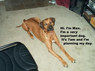 Hi. I'm Max. I'm a  very important dog.   It's 7am and I'm    planning my day.