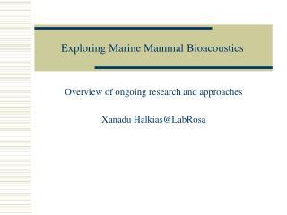 Exploring Marine Mammal Bioacoustics