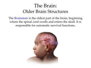 The Brain:  Older Brain Structures