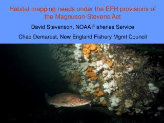 Habitat mapping needs under the EFH provisions of the Magnuson-Stevens Act