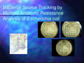 Bacterial Source Tracking by Multiple Antibiotic Resistance Analysis of  Escherichia coli