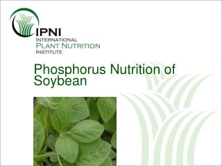Phosphorus Nutrition of Soybean