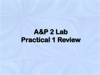 A&P 2 Lab  Practical 1 Review