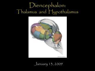 Diencephalon: Thalamus  and  Hypothalamus