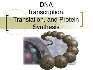 DNA  Transcription, Translation, and Protein Synthesis