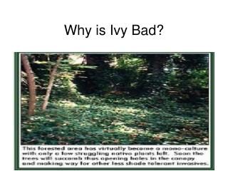 Why is Ivy Bad?