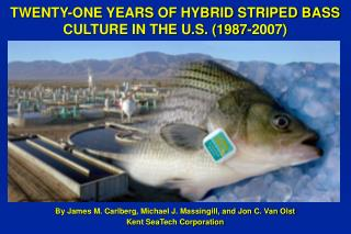 TWENTY-ONE YEARS OF HYBRID STRIPED BASS CULTURE IN THE U.S. (1987-2007)