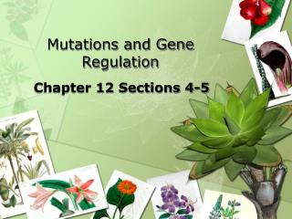 Mutations and Gene Regulation