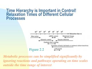 Time Hierarchy is Important in Control! Relaxation Times of Different Cellular Processes