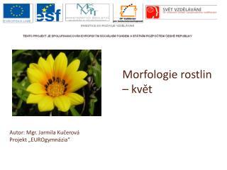Morfologie rostlin � kv?t