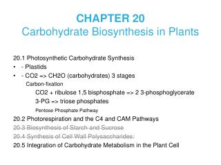 CHAPTER 20  Carbohydrate Biosynthesis in Plants