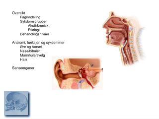 Oversikt  Faginndeling Sykdomsgrupper  Akutt/kronisk Etiologi Behandlingsnivåer