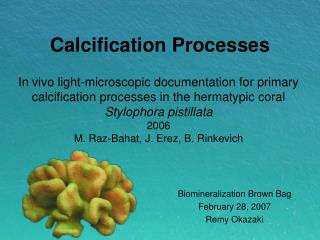 Calcification Processes