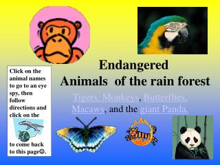 Endangered  Animals  of the rain forest