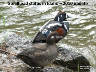Steelhead status in Idaho 2010 update