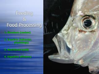 Feeding   Food Processing