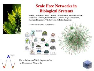 Scale Free Networks in  Biological Systems
