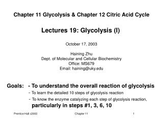 Chapter 11 Glycolysis & Chapter 12 Citric Acid Cycle