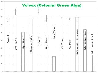 Volvox (Colonial Green Alga)