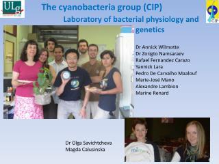 The cyanobacteria group (CIP)