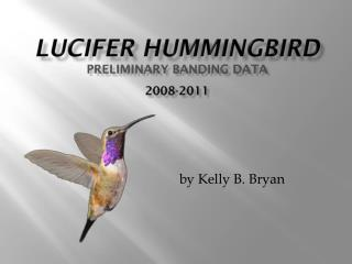 LUCIFER HUMMINGBIRD Preliminary banding data 2008-2011