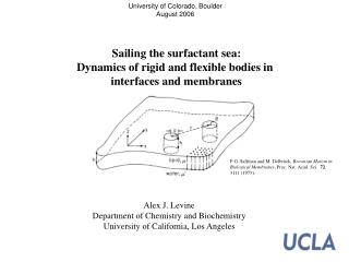 Sailing the surfactant sea: Dynamics of rigid and flexible bodies in  interfaces and membranes