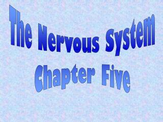 The Nervous System Chapter Five