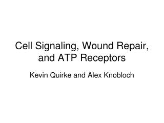 Cell Signaling, Wound Repair, and ATP Receptors
