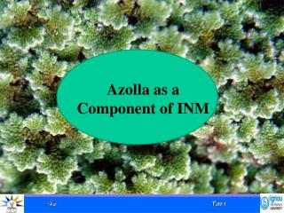 Azolla as a Component of INM