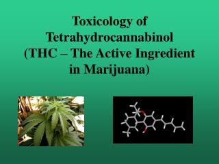 Toxicology of Tetrahydrocannabinol (THC – The Active Ingredient in Marijuana)